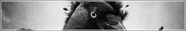 Surrealistic crow photoshop tutorial